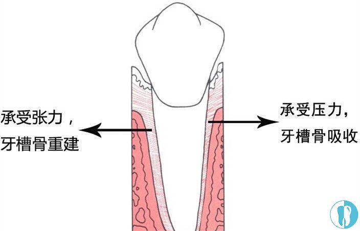 牙槽骨重建后牙齿会移动